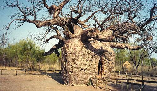 Est-ce encore un arbre ?